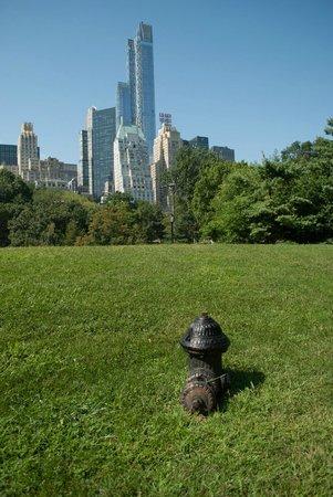 Citifari: Central Park Tour