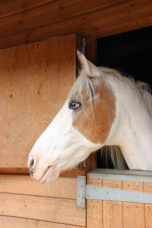 Hopefield Animal Sanctuary: Hope