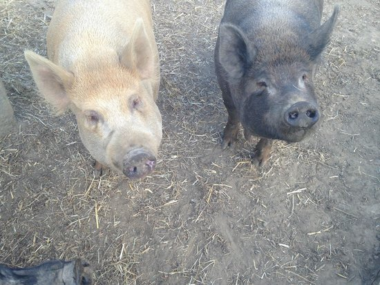 Hopefield Animal Sanctuary: Ginger and Pepper