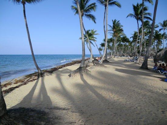 Sirenis Punta Cana Resort Casino & Aquagames: la plage de l'hôtel