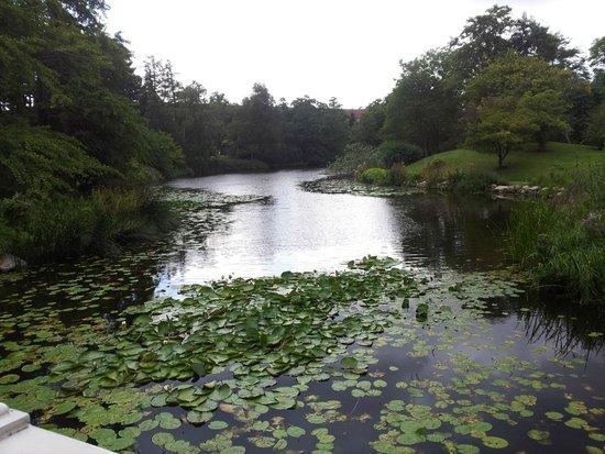 Botanical Gardens (Botanisk Have) : laghetto