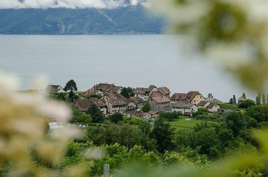 Le Haut des Vignes : Vieux-Bourg de Lutry/Savuit