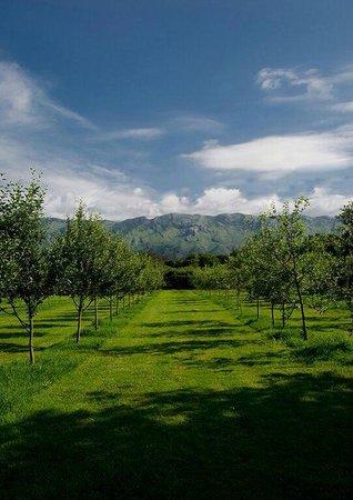 El Romano: Vista de las líneas de plantación