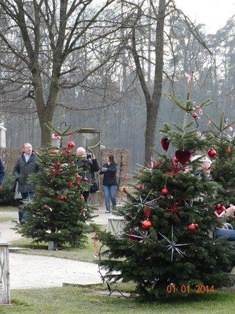 Schlosscafe im Palmenhaus: Зимой вместо пальм - ёлки