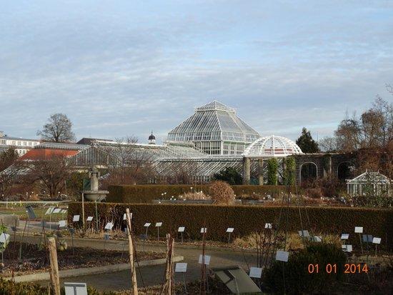 Botanischer Garten Muenchen-Nymphenburg: Оранжерея