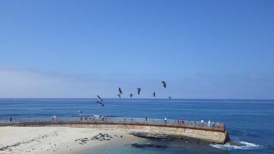 La Jolla Cove: La Jolla