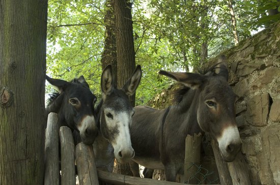 Torre Di Bellosguardo : the donkeys