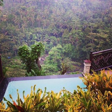 Kupu Kupu Barong Villas and Tree Spa : view from the pool