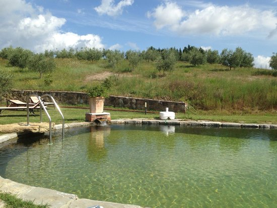 Agriturismo La Collina: Piscina con acqua naturale fantastica