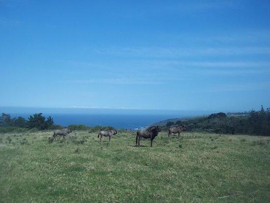 Kwelanga Country Retreat: Kwelanga Views