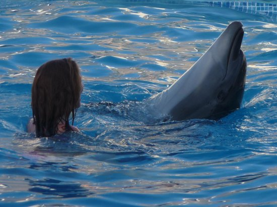 Sharm Vacations Excursion - Day Tours : Dancing with the Dolphin - Steven