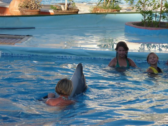 Sharm Vacations Excursion - Day Tours : more dancing - so amazing