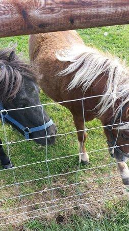 Mini Meadows Farm: Ponies
