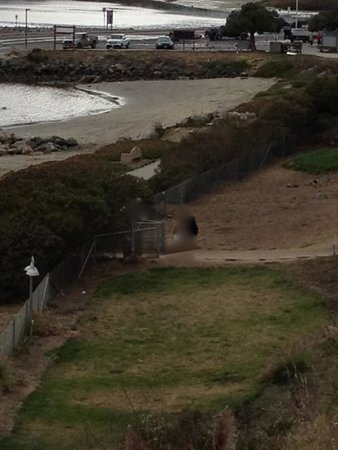 Beach House at Half Moon Bay: The real beach front looks like this