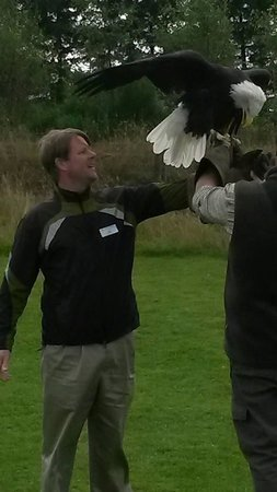 Phoenix Falconry: My husband with the Bald Eagle