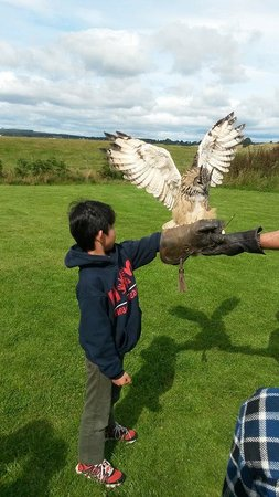 Phoenix Falconry: My son with the Eagle Owl