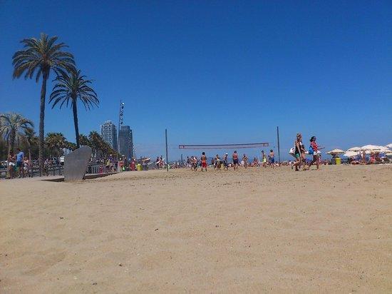 Hotel Cram: the beach