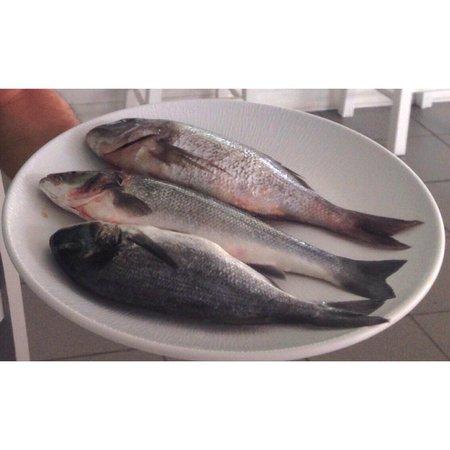 Medusa Restaurant : Fresh fish everyday