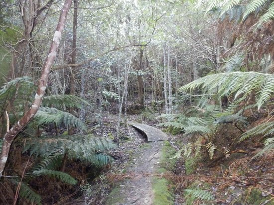 Huon Bush Retreats: Bush walking
