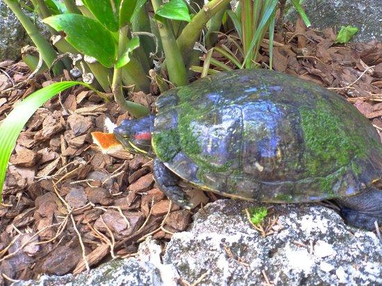 Cambridge Beaches: Turtle