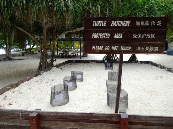 Pom Pom Island Resort & Spa: nursery tortues