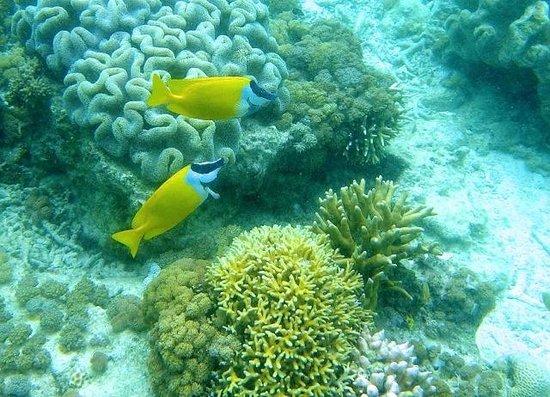 Pom Pom Island Resort & Spa: lagon hotel