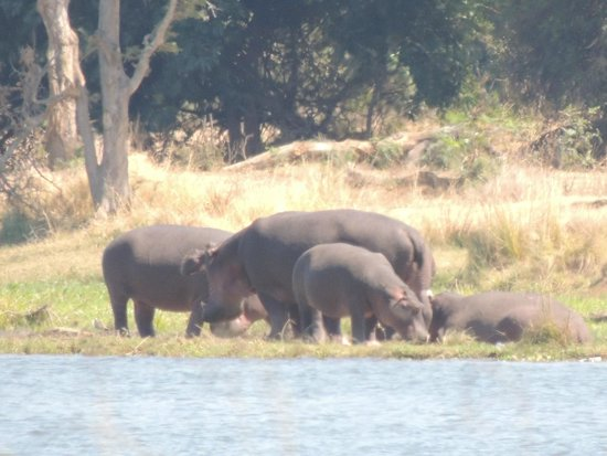 Chongwe River House: Hippos across the river