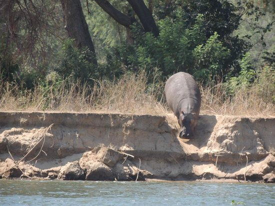 Chongwe River House: Time to cool off