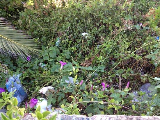 Balcón de Europa: Trash in the bushes