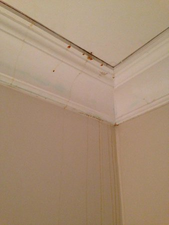 Devon Valley Hotel: Ugly stains running down from ceiling