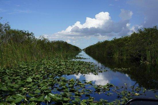 an analysis of everglades Everglades national park official webpage, everglades national park, everglades,national parks,national park,everglades national park,everglades park.