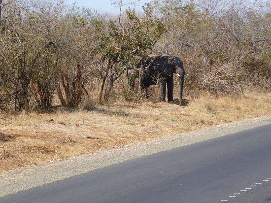 Waterberry Zambezi Lodge: Elephant on the road to Livingston