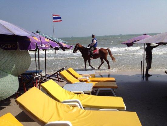 City Beach Resort: ホアヒンビーチ 馬がいます