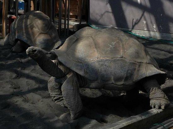 Oshima Park : ウミガメが迫力です。