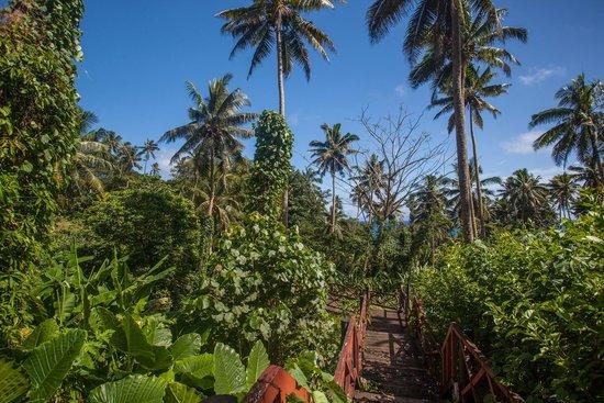 Maravu Taveuni Lodge: Tropical Walkways