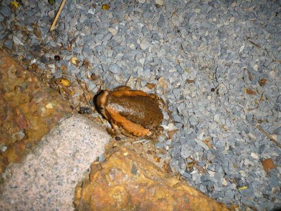 Belmond Napasai: Frosch