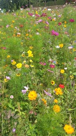 Eyrignac et ses Jardins : Jardín de flores silvestres