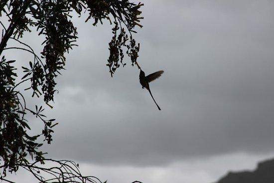 Valle de la Luna: колибри
