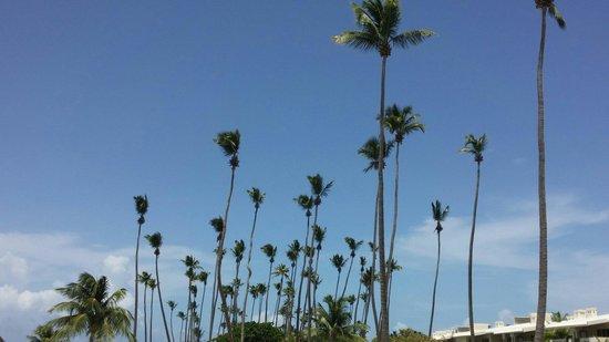Melia Coco Beach : Coco beach at the resort.