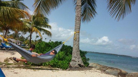 Melia Coco Beach : Resort's beach. Hammocks everywhere.