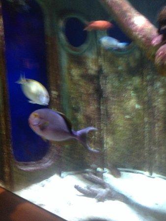 Long Island Aquarium & Exhibition Center: fish