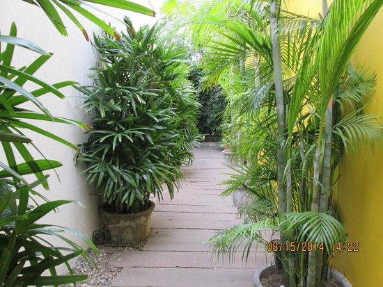 Devraj Niwas (Stay Well Planted): Green walkways from room to restaurant