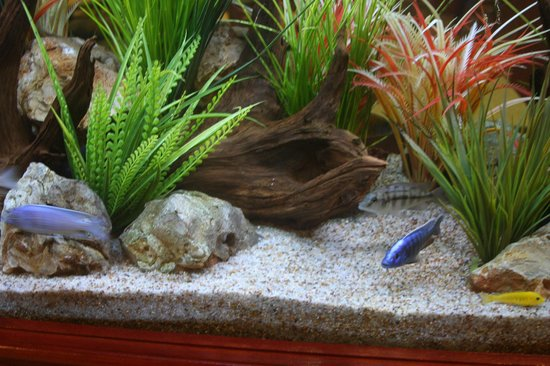 Quality Inn & Suites Beachfront: Aquarium close up