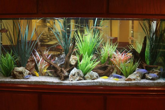 Quality Inn & Suites Beachfront: Our NEW Aquarium with dozens of fish to entertain in our Lobby