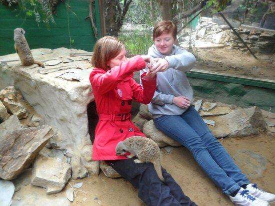Amazonia - World of Reptiles: Teenagers meeting the meerkats