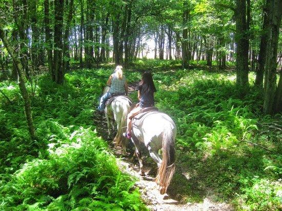 The Ranch at Pocono Manor: Serene horseback trail with nature surrounding...