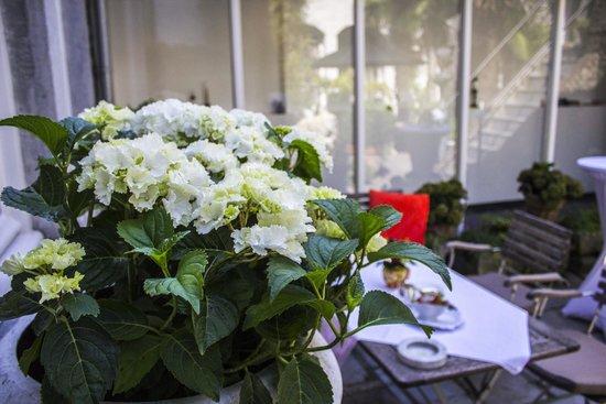 Hotel Dis : Garden