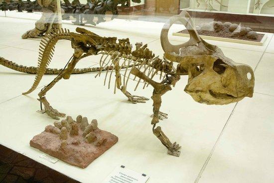 Paleontologic Museum: Orlov Palaeontolggy Museum
