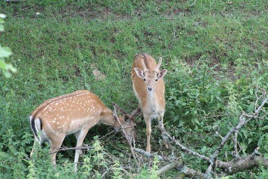 Hotel Burg Colmberg: Deer preserve