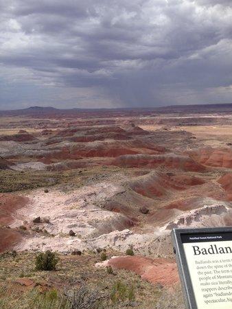 Painted Desert : Petrified stumps